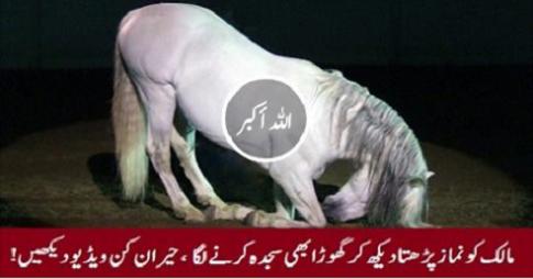 Horse-prayer
